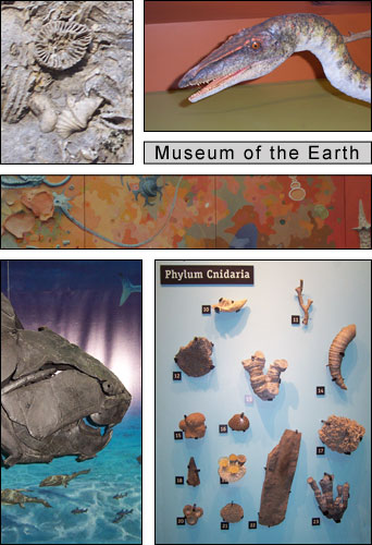 Museum of the Earth